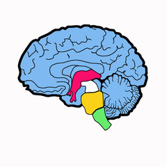 bright drawing of the brain