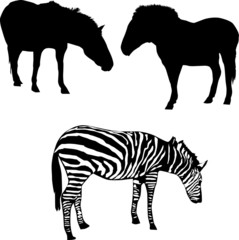 two horses and zebra