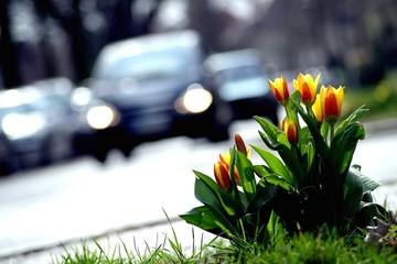 Blumen an der Straße