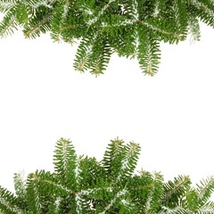 Pine branches with snow, isolated