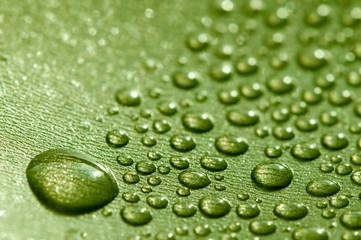 beautiful macro image of droplets in green
