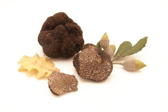 Truffes et feuilles