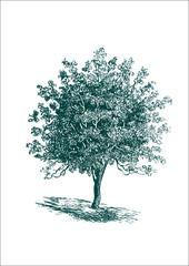 vintage detailed vector tree