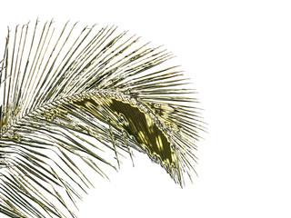 palme métallique