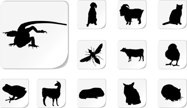 Animals. Set of 12 round vector buttons for web