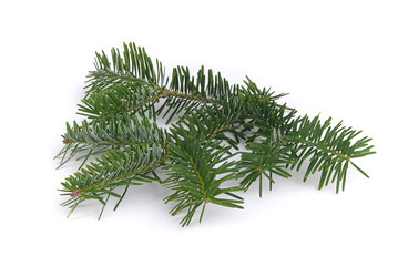 Tannenzweig - fir branch 03
