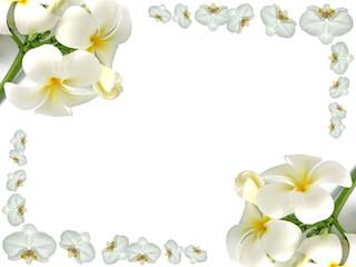 cadre de frangipaniers et d'orchidées