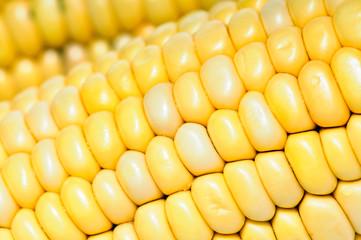 corn cobs texture