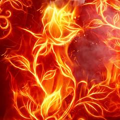 Fire rose