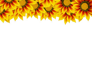 haut de page fleuri avec des fleurs de gazania