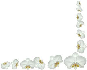 coin d'orchidées blanches