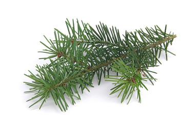 Tannenzweig - fir branch 04