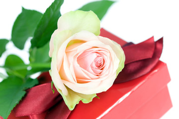 Pink rose and gift box.