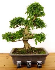 In de dag Bonsai bonsai/bougie