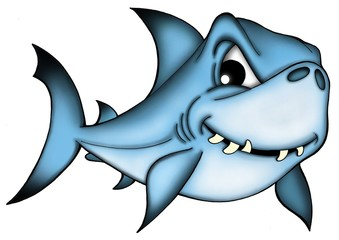 Shark on white background