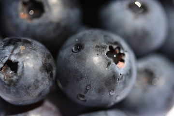 Blueberries close-up with water drops