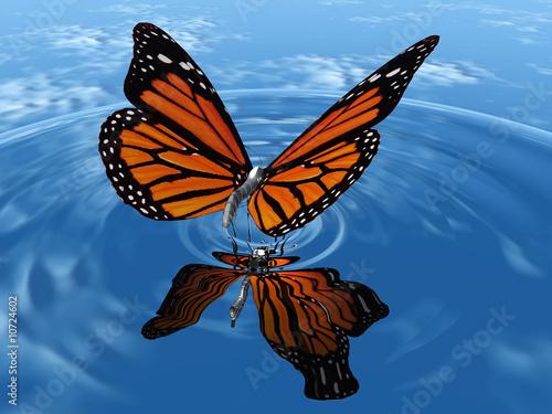 papillon sur l 39 eau photo libre de droits sur la banque d 39 images image 10724602. Black Bedroom Furniture Sets. Home Design Ideas