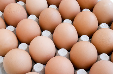 eggs new 13