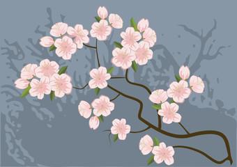 sakura, cherry-tree