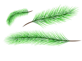 Set of basical pine tree branches