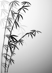 Bamboo in foggy a smoke