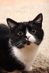 small black cat