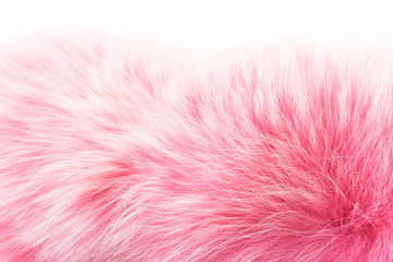 Rose fur on white