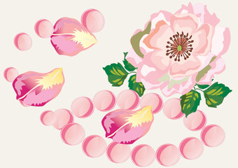 pink rose with rose-petals