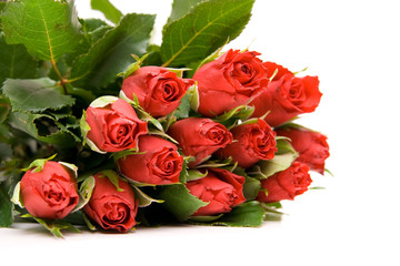 red roses isolated on white. valentine's day