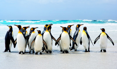 Foto auf AluDibond Pinguin Kings of the Beach