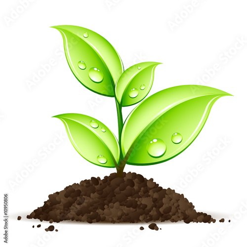 Jeune plante qui pousse fichier vectoriel libre de for Acheter des plantes par internet