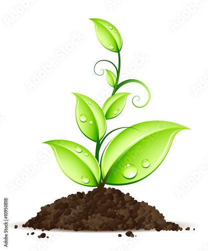 Jeune plante fichier vectoriel libre de droits sur la for Plante qui pousse