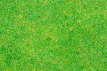 Close up of golf putting grass with tiny pellets of Fertilizer