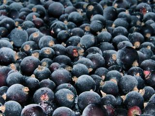 Currant berries frozen