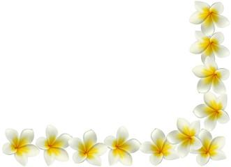 coin de page avec des fleurs de frangipanier