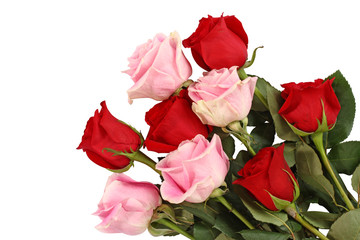 Pink and red roses isolated on white background