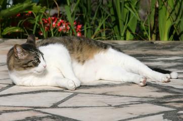 chat se prélassant dehors