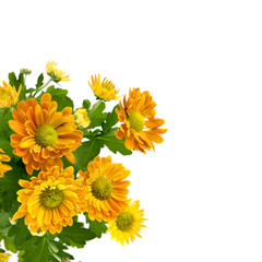 yellow chrysanthemum bouquet isolated on white