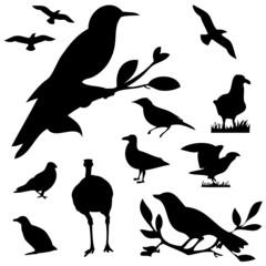 birds set silhouettes vector