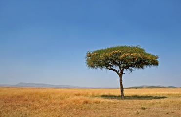 Landschaft mit Baum, Masai Mara Kenia