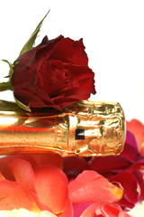 champagne et rose rouge