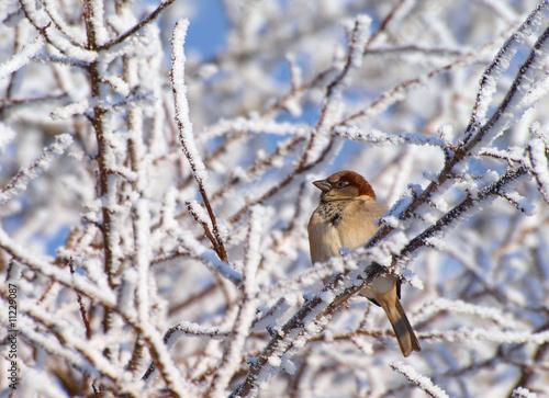 vogel im winter stockfotos und lizenzfreie bilder auf bild 11229087. Black Bedroom Furniture Sets. Home Design Ideas