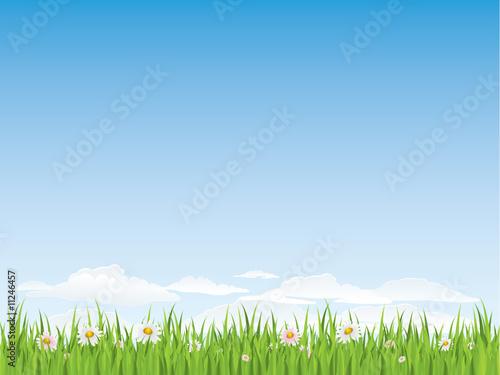 green grass png - HD3000×2247