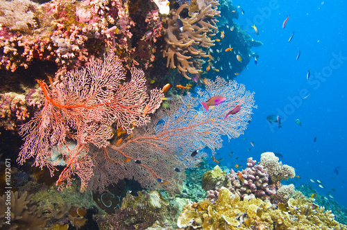 largest coral reef research - 1000×665
