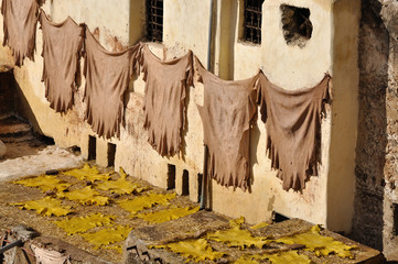 Animal skins drying in a tannery, Fes Morocco
