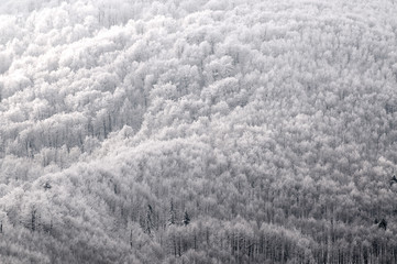 abstract b&w winter forest scene