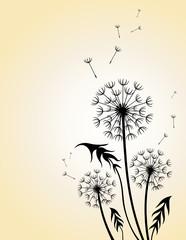 Dandelion. Floral design.