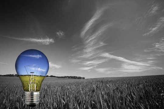 black and white landcape with colorful blue light bulb