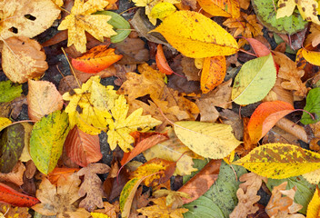 Autumn leaves background..