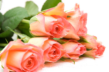 Roses isolated on white. space for text